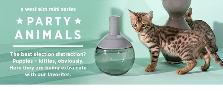 A west elm mini series - Party Animals! The best election distraction? Puppies + kitties, obviously. Here they are being extra cute with our favorites.