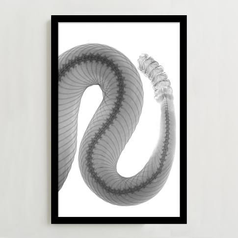 WE Print Collection, Snake Tail
