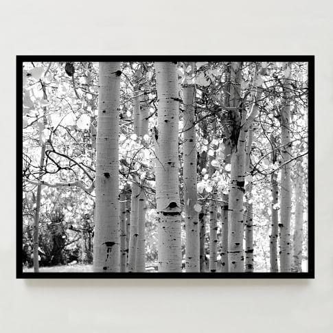 Framed Print, Trees, 40