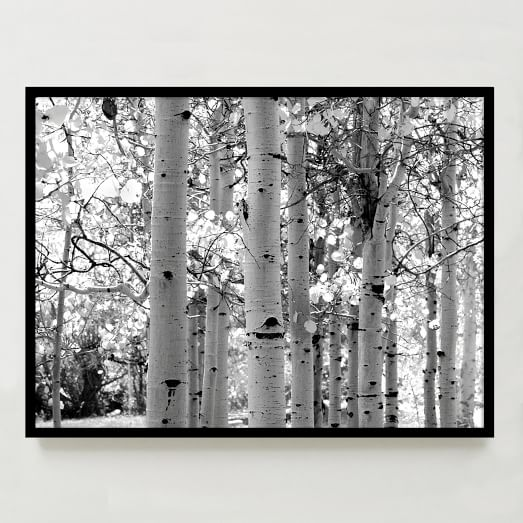 Framed Print, Trees, 40