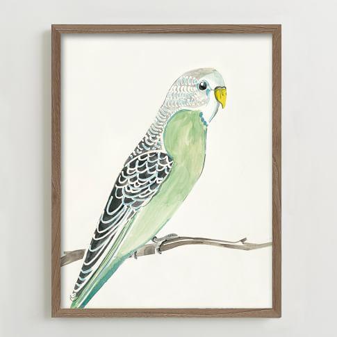 Framed Print, Parakeet Portrait