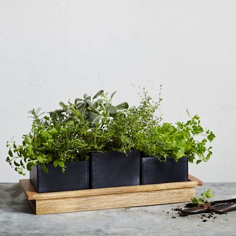 Wood And Chalkboard Herb Planter Set